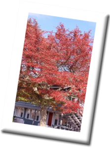 Cape Cod Inn Fall Foliage