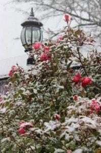 Cape Cod Winter Scene