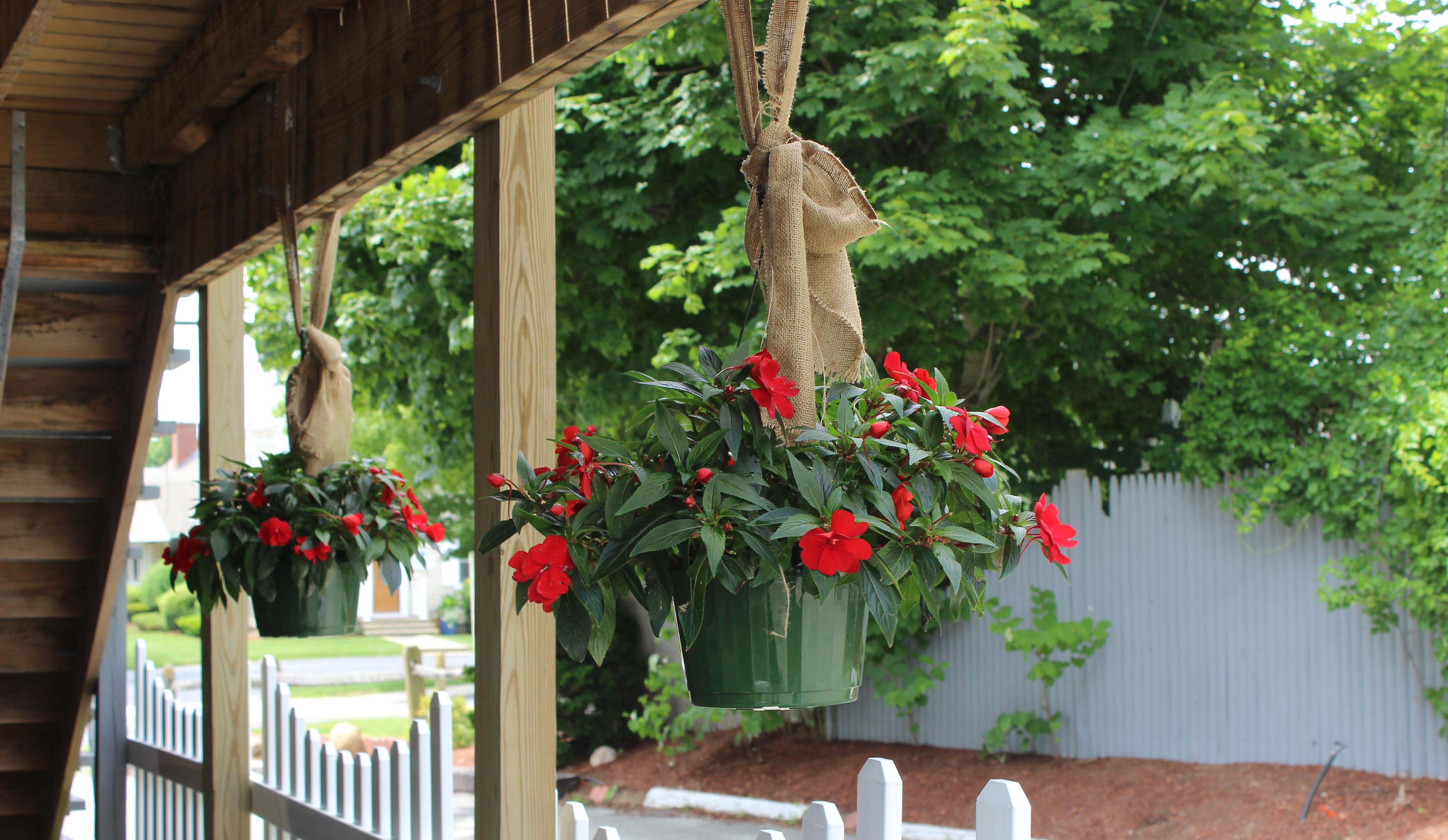 hang plant entr
