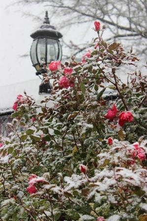winter 1 – Copy